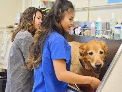 Veterinary Science students are supported by community members who provide pets for grooming instruction and funding for program supplies and materials.